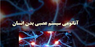آناتومی سیستم عصبی - گروه پزشکی طب لاین